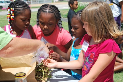 Collecting seeds for next year's garden is one of the learning experiences at New Roots. (Photo: Tammy Holloway)
