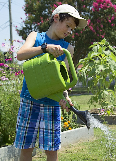 Ryan Joseph Abraham, 8, waters plants at New Roots Youth Garden. (Photo by Sher Horosko)