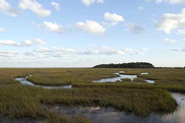 This is what the writer came to see -- marshland at Eastern Shore of Virginia National Wildlife Refuge -- but she also wrote about the  Town of Cape Charles. (Photo by Xavier de Jauréguiberry, Flickr)