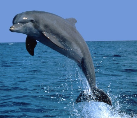 Letter Save The Bottlenose Dolphins