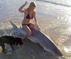 In encounters with sharks, humans usually come out on top. (Sunshine Coast Daily photo)