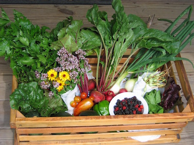 Late June basket from Copper Cricket Farm. (Photos: Karen Gay)